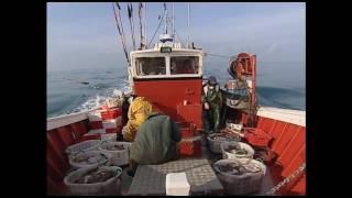 Documentaire Des pêcheur sénégalais en baie d'Arcachon