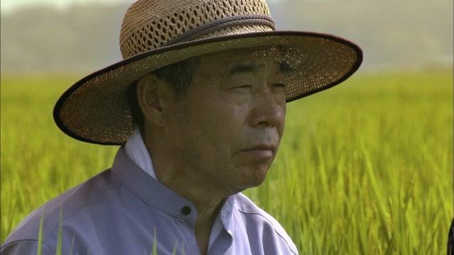Documentaire Le maître du Riz – Japon