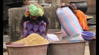 Documentaire L'ambitieux défi du riz africain