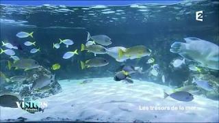 Documentaire L'aquarium de La Rochelle