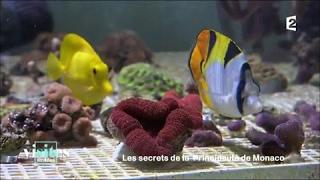 Documentaire Le musée océanographique