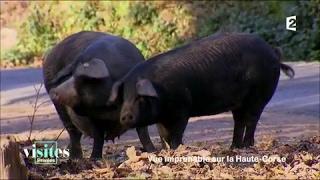 Documentaire Le porc Nustrale