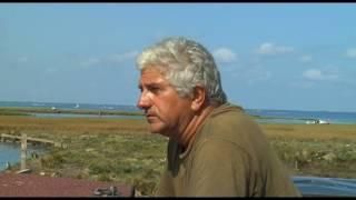 Documentaire Les siffleurs du bassin : chasse aux Limicoles
