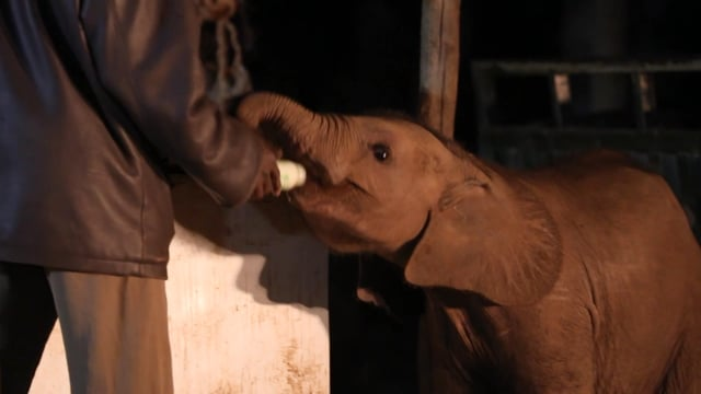 Documentaire Mémoires d'éléphants : Nania