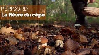 Documentaire Périgord – La fièvre du cèpe