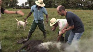 Documentaire Vas voir ailleurs : destination Brésil