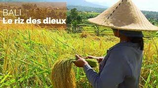 Documentaire Bali – Le riz des dieux