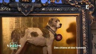Documentaire Barry, chien sauveteur