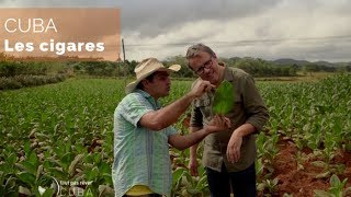 Documentaire Cuba – Les cigares