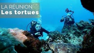 Documentaire La Réunion – Les tortues