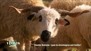 Documentaire Le mouton Thônes et Marthod