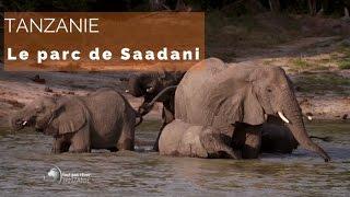 Documentaire Tanzanie – les animaux du parc Saadani