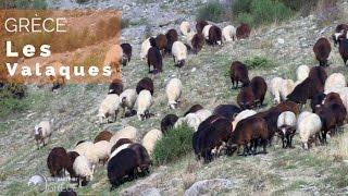 Documentaire Grèce – L'odyssée des Valaques
