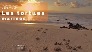 Documentaire Grèce – Les tortues marines