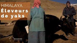 Documentaire Himalaya – Les éleveurs de yak