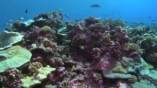 Documentaire Iles Cook : les trésors de l'océan