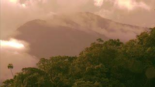 Documentaire Iles salomon : la forêt, le trésor du peuple