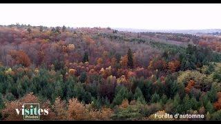 Documentaire La forêt de Tronçais