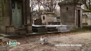 Documentaire L'école des chats de Montmartre