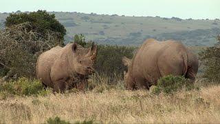 Documentaire Rhinoceros noir de Namibie, leur dernier refuge sauvage
