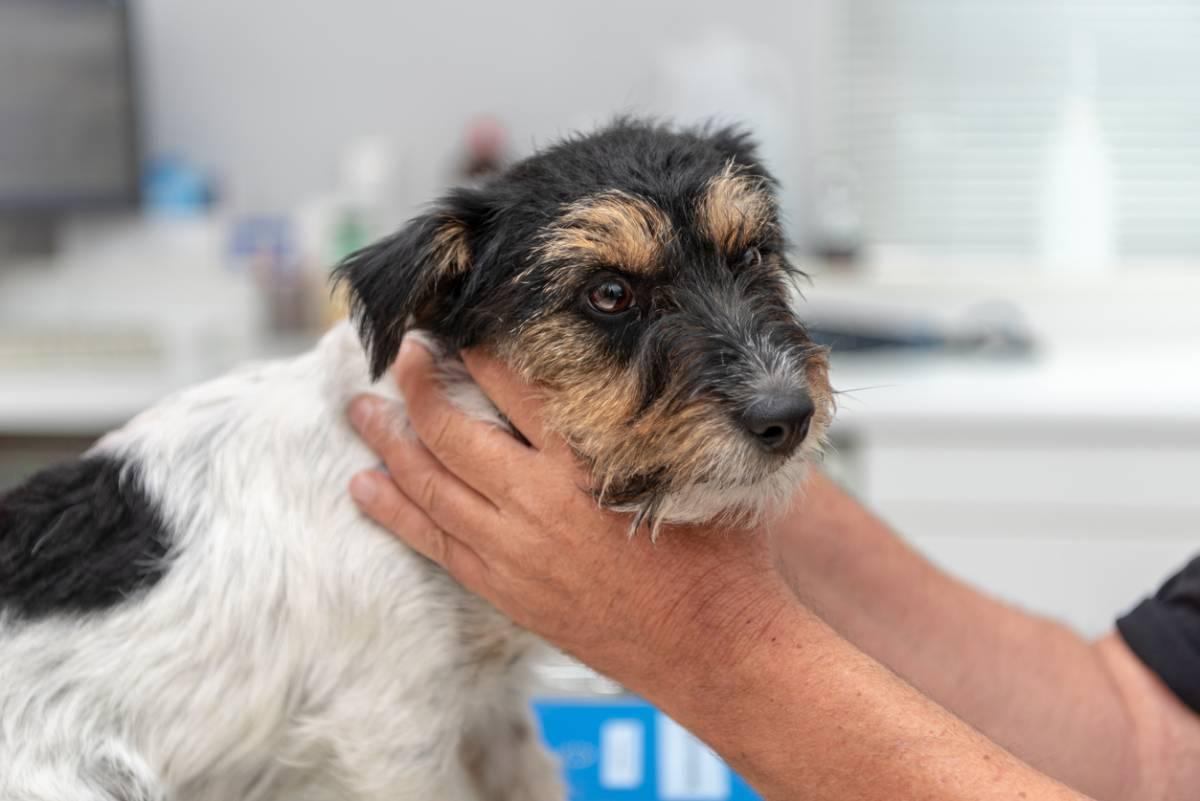 Documentaire Tout savoir sur l'ostéopathie pour animaux
