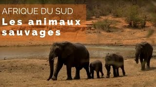 Documentaire Afrique du Sud, du Kruger au Cap – les animaux sauvages
