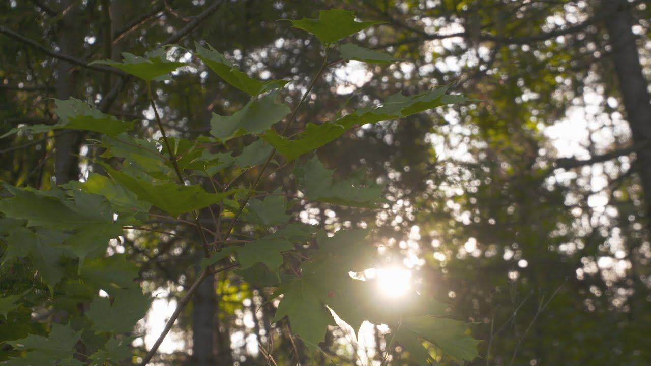 Documentaire La forêt désenchantée
