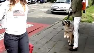 Documentaire Un psy pour mon chien