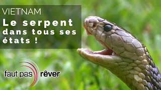 Documentaire Vietnam – le serpent dans tous ses états