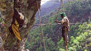 Documentaire Himalaya : face aux abeilles géantes !