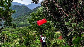 Documentaire Japon : la chasse aux papillons