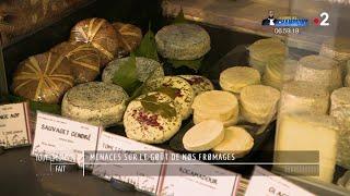 Documentaire Menaces sur le goût de nos fromages