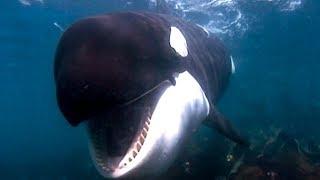 Documentaire A l'école des orques de Crozet
