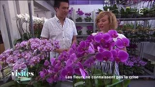 Documentaire La folie des orchidées