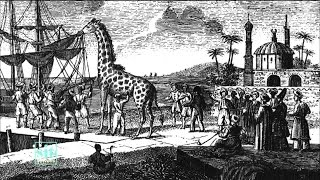 Documentaire La girafe de Charles X