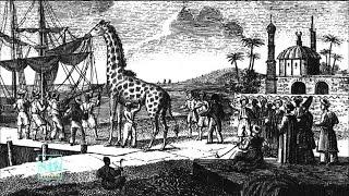 La girafe de Charles X