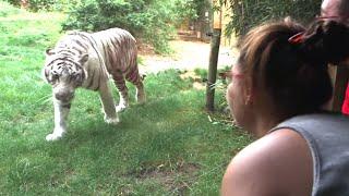 Documentaire Le business des zoos