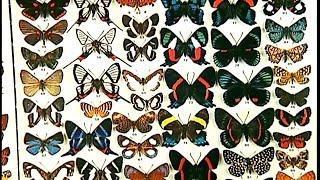 Documentaire Les papillons pour l'art decoratif