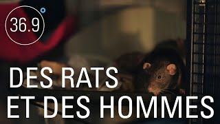 Documentaire Peste et maladies oubliées : le retour