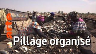 Documentaire Sénégal : pilleurs des mers