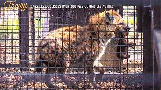 Documentaire Thoiry : dans les coulisses d'un zoo pas comme les autres