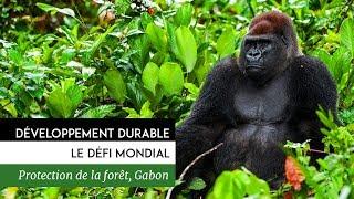 Documentaire Développement durable, le défi mondial – Gabon, gestion durable des fôrets