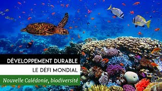 Documentaire Développement durable, le défi mondial – Nouvelle-Calédonie, la biodiversité