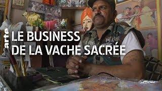 Documentaire Inde : le business de la vache sacrée