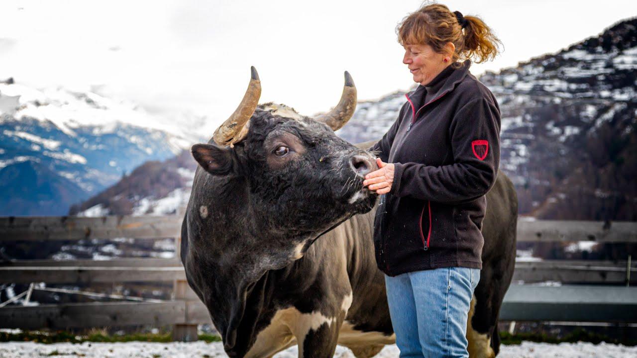 Documentaire Julie, la vétérinaire qui soignait le gros bétail