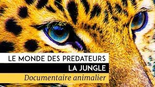 Documentaire Le monde des prédateurs – La Jungle