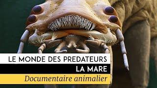 Documentaire Le monde des prédateurs – La Mare