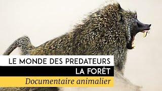 Documentaire Le monde des prédateurs – La fôret