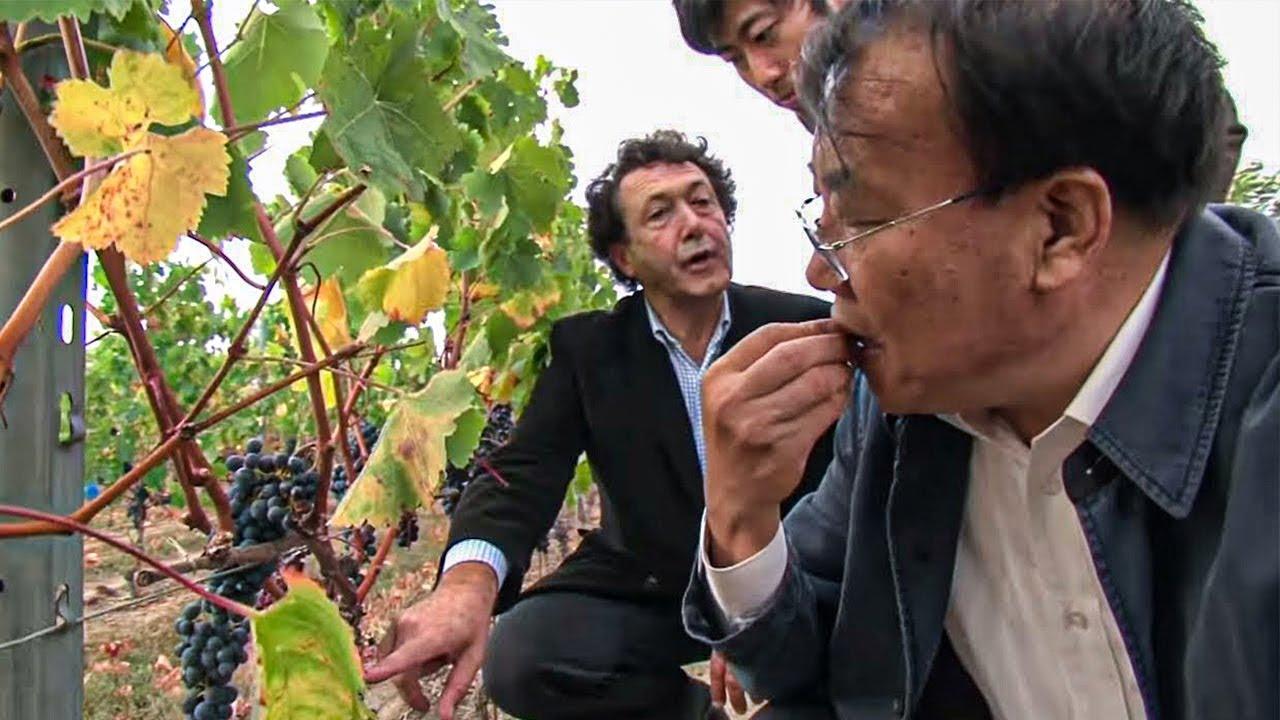 Documentaire Les chinois rachètent les vignobles français