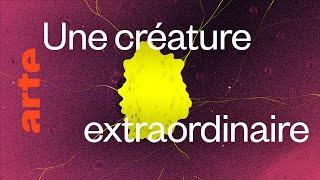 Documentaire Les infos clés sur le blob, un génie sans cerveau